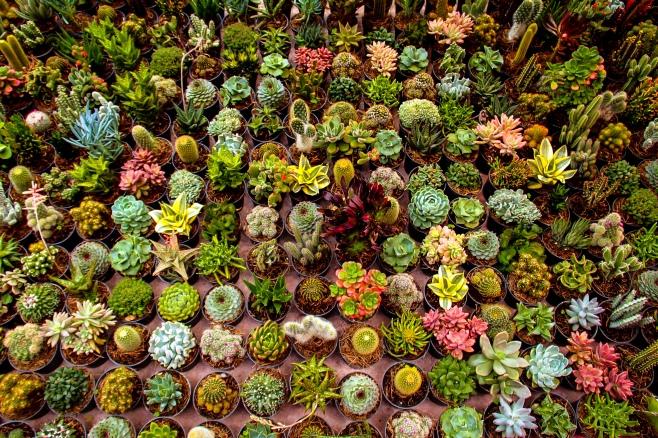 Plant Sale The Solipsist