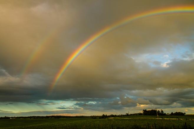 Rainbow I-3533