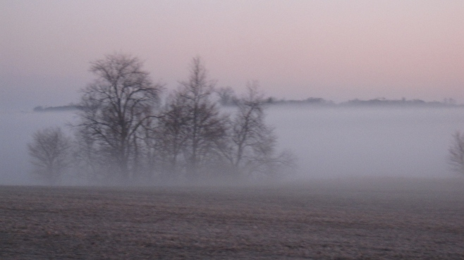 Fog in the Late Winter 008