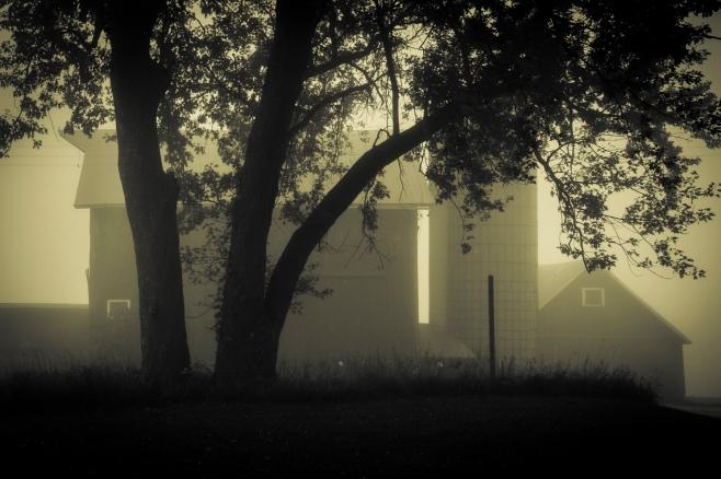 fog-split-tone-4100