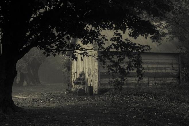 fog-split-tone-4104